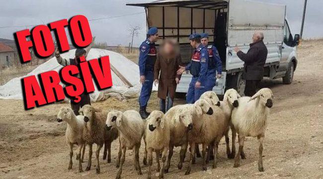 Jandarma İzmir'de hayvan hırsızlarına göz açtırmadı