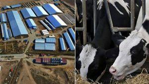 Süt bitti kavga başladı (Çiftlikbank'tan sonra Sütbank)