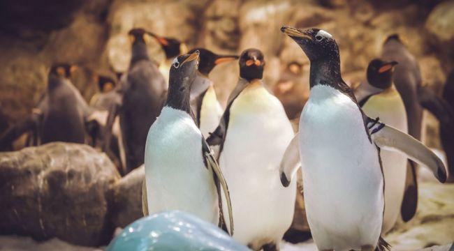Çocuklar için internet üzerinden gezebileceğiniz hayvanat bahçeleri ve akvaryumlar