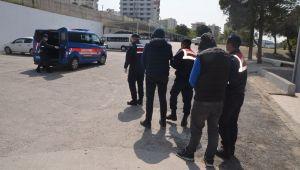 İzmir'de Jandarma hayvan hırsızlarını yakaldı