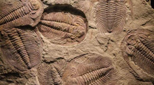 Tüm hayvanların atası olabilecek bir canlı fosili bulundu!