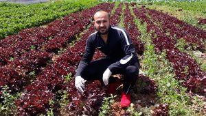 KKTC'de çiftçiden halka bedava sebze jesti