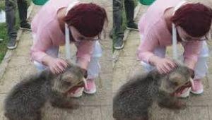 Emel Müftüoğlu'nun elini yavru ayı ısırdı
