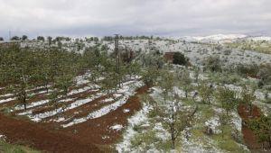 Konya'da kiraz bahçelerini kar vurdu