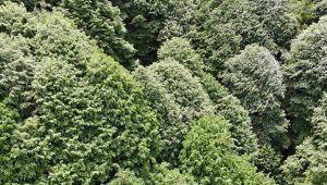 Koronavirüs nedeniyle ormanlar boş kaldı