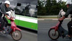 Bursa'da bir köpek motosiklet direksiyonuna geçti