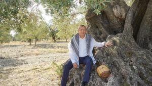 Dünya zeytin ağacı günü kutlu olsun