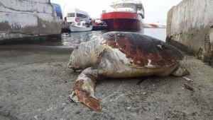 45 yaşındaki caretta caretta kıyıya vurdu