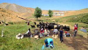 TİGEM'İN CEYLANPINAR ARAZİSİNDE 40 YILLIK İŞGAL
