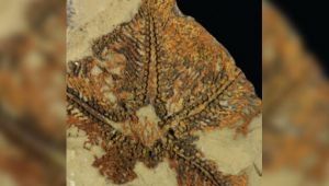 Dünyanın bilinen en eski denizyıldızı