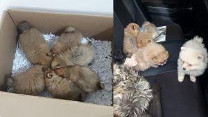 Evcil hayvan kaçakçılarının yöntemi 'pes' dedirtti