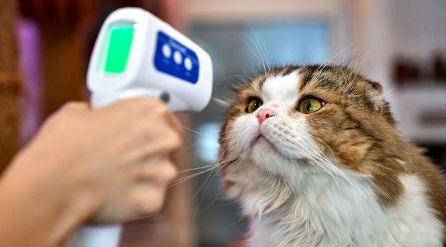 Kedinin corona testi pozitif çıktı
