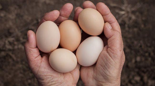 Yumurta fiyatları 1 yılda 2 katına çıktı
