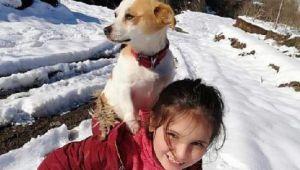 Hastalanan köpeğini sırtında veterinere götürdü