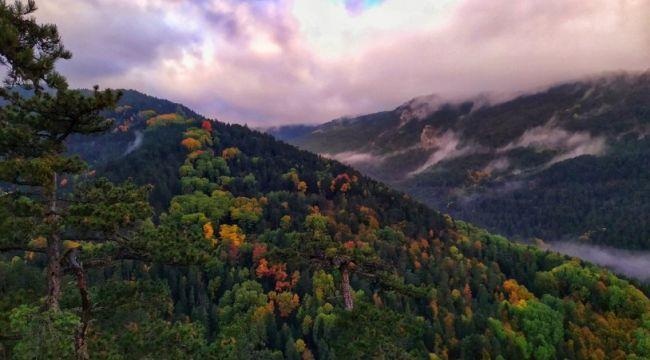 Maden projesi için en az 36 bin ağaç kesilecek