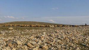 Mardin'de son 20 yılın en kurak dönemi