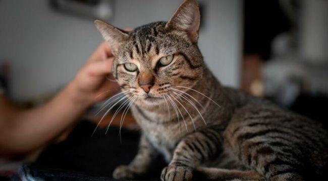 Evcil kediye Covid-19 bulaştı