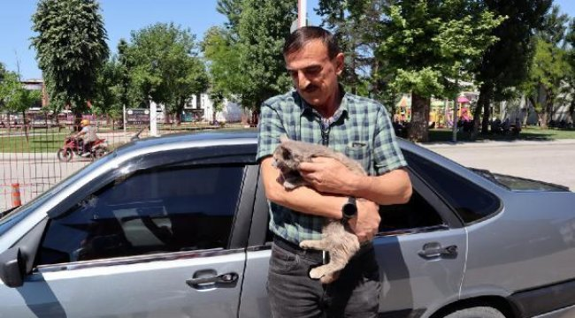 Bolu'da aracın motoruna giren kedi, Düzce'ye gitti
