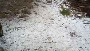Artvin'de dolu yağışı etkili oldu