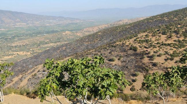 Nazilli'de korkutan orman yangını kontrol altına alındı