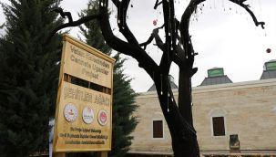 'Şehitler Ağacı'ndan şehit askerlerin künyelerini çaldılar