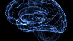 'Beyin pili sara, obezite, Alzheimer gibi birçok hastalığa çözüm olabilir'